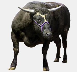 茨城産の高級黒毛和牛「常陸牛」